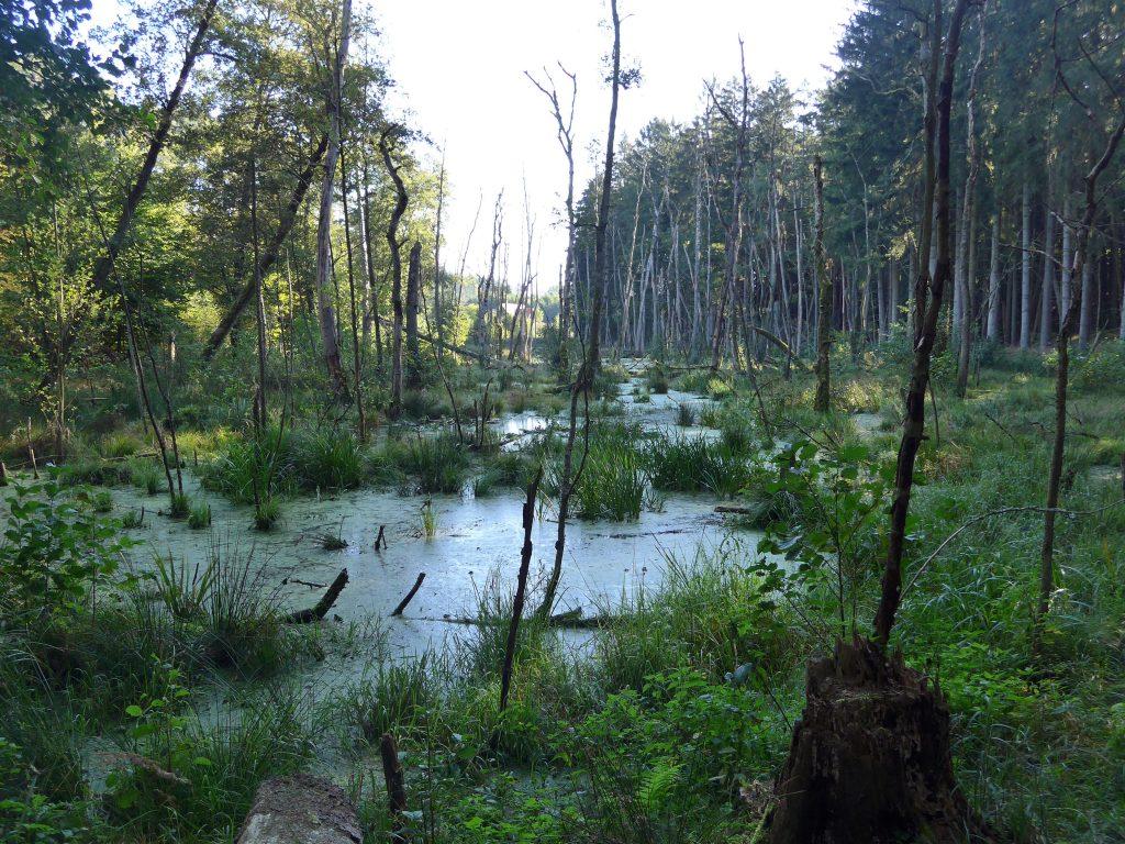 Auch mal am Sumpf vorbei