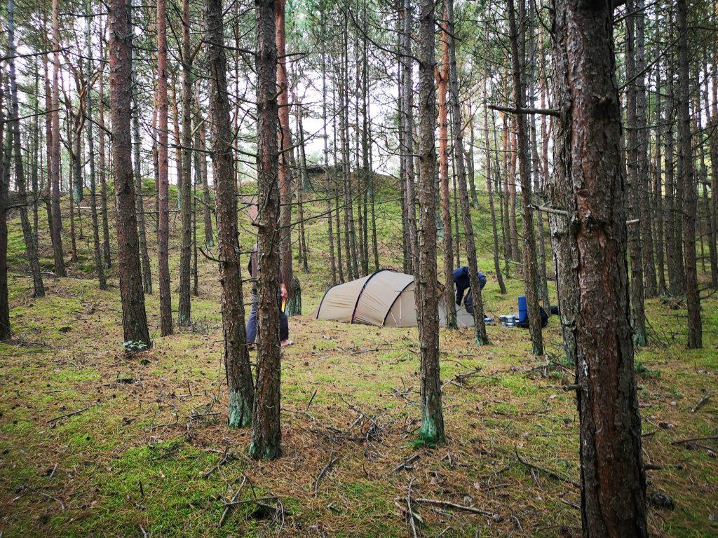 Lagerplatz im Küstenwald